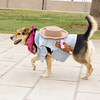 Maddie, costume, cowgirl, ayora, walk, offleash