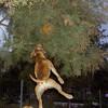 Tyson tree_005