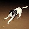 Braco (boy pup)_004