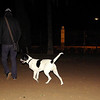 Braco (boy pup)_003