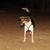 Cleo (girl pup)_002