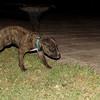 Zeus (puppy boy)_001