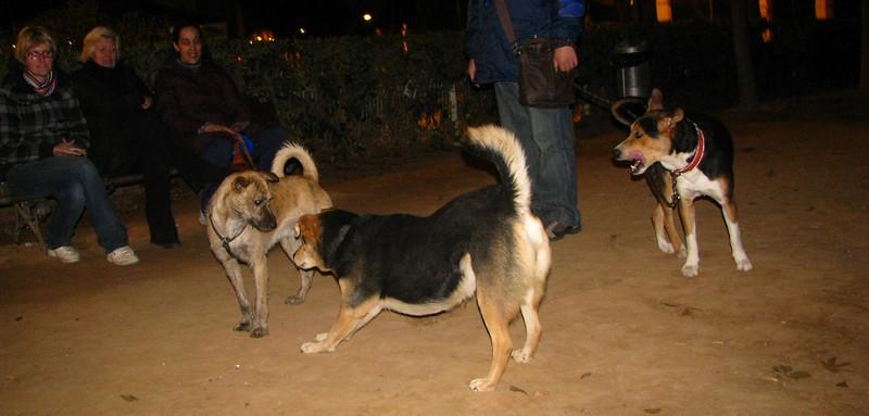 Angus, Maddie, Urco_001
