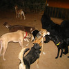 Dog (new, group)_001