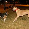 Darwin (beagle), Mimi_001