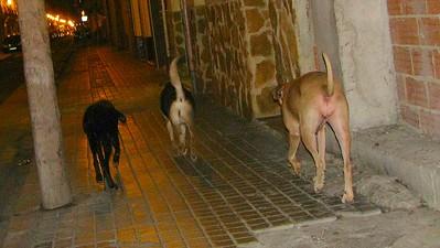 Fifty; Mimi; Maddie; friend; girlfriend; walk; valencia