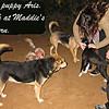 maddie, mommy, puppy, queen, ayora