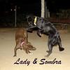 lady, sombra, ayora