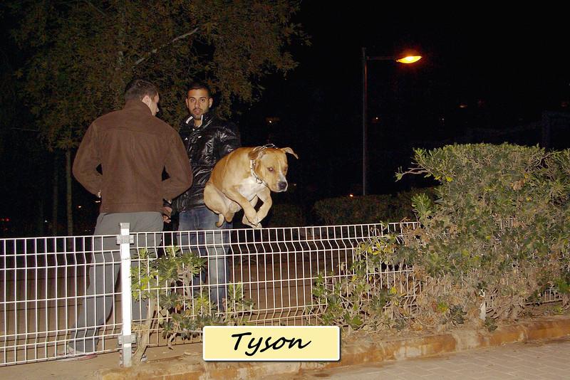 tyson, fence, gate, leap, jump, angel, people