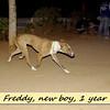 freddy, new, male, 1, year, ayora