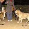 jacobo, boxer, old, bruce, ayora