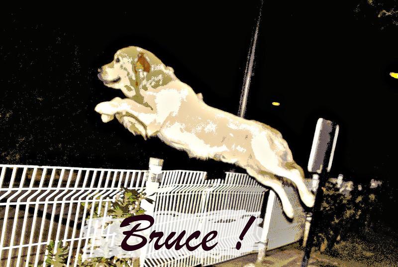 bruce, gate, fence, leap, ayora