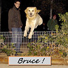 bruce, gate, fence, leap, ayora, marc, people