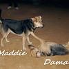 maddie, dama, mommy, puppy, ayora