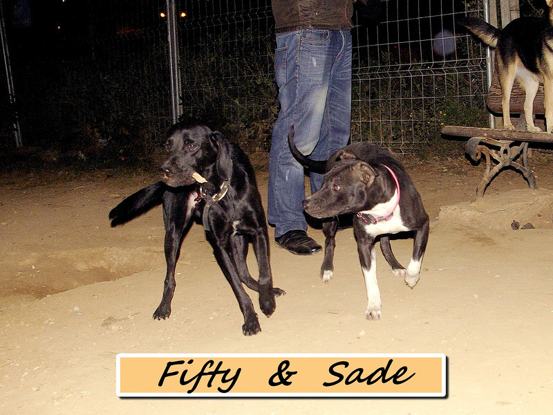 fifty, sade, ayora