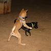 Mac (new boy puppy), Mora_001