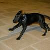 Boss (puppy boy)_001
