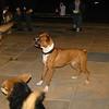 Sasha (boxer)_001