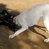 Boss (puppy), Kiba_005