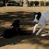 Boss (puppy), Kiba_003