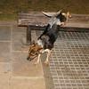 Cleo (puppy girl)_001