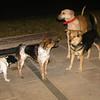 Cleo, Mimi, Maddie, Dux_001