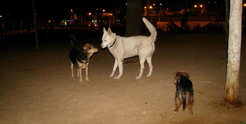 Blaco, Maddie, Xiquet_001