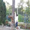 Tyson jump Jade puppy_mpeg4