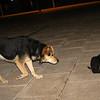 Hada (lost puppy girl), Maddie