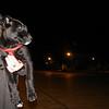 Hada (lost puppy girl)