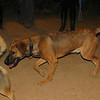 Max (pup boy)_002