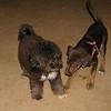 Choco (girl puppy), COCO_001
