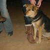 Choco (girl puppy), Maddie_001