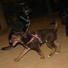 Choco (girl puppy, 1st)_003