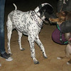 Choco (girl puppy, 1st)_007