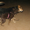 Choco (girl puppy), Maddie_002