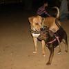 Choco (girl puppy), Tyson_001