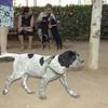 Nas (new puppy boy)_001