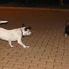 Kun (new boy puppy 3mo)_002