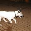 Kun (new boy puppy 3mo)_003