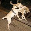 Sasha, New boy pup_001