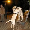 Sasha, New boy pup_002