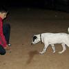 Kun (puppy boy)_003