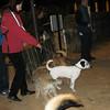 Kun (puppy boy)_001