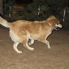 Molly (pup girl)_001