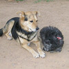 Maia (puppy), Maddie_004