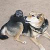 Maia (puppy), Maddie_007