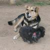Maia (puppy), Maddie_006
