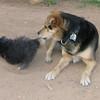 Maia (puppy), Maddie_005