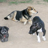 Maddie maia sade (puppies)_001